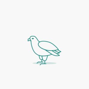 Pigeons & Parrots